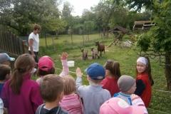 návštěva u zvířátek